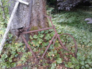 antique rusty bicycle against a tree